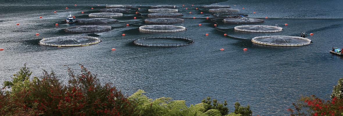 Camanchaca Pesca